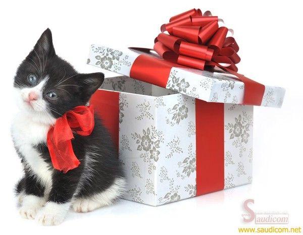 des id es de cadeaux de no l pour mon chat. Black Bedroom Furniture Sets. Home Design Ideas