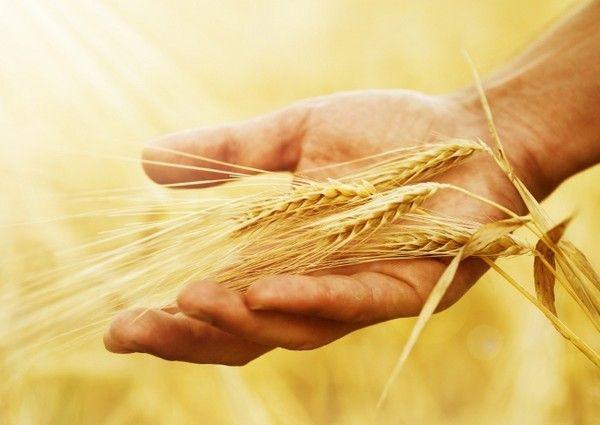 Le fermier qui se croyait Dieu...