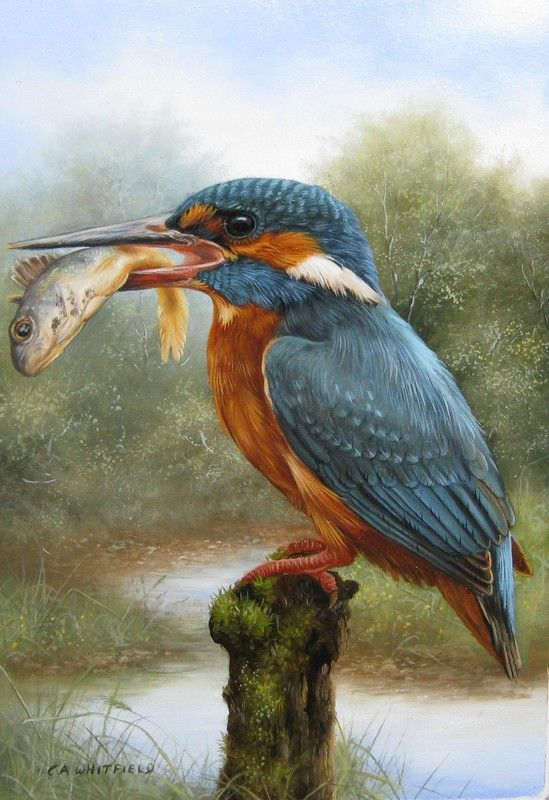 Carl Whitfield - British Wildlife Artist